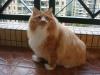 上官的开心猫屋 的头像