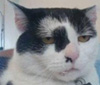 老猫54 的头像